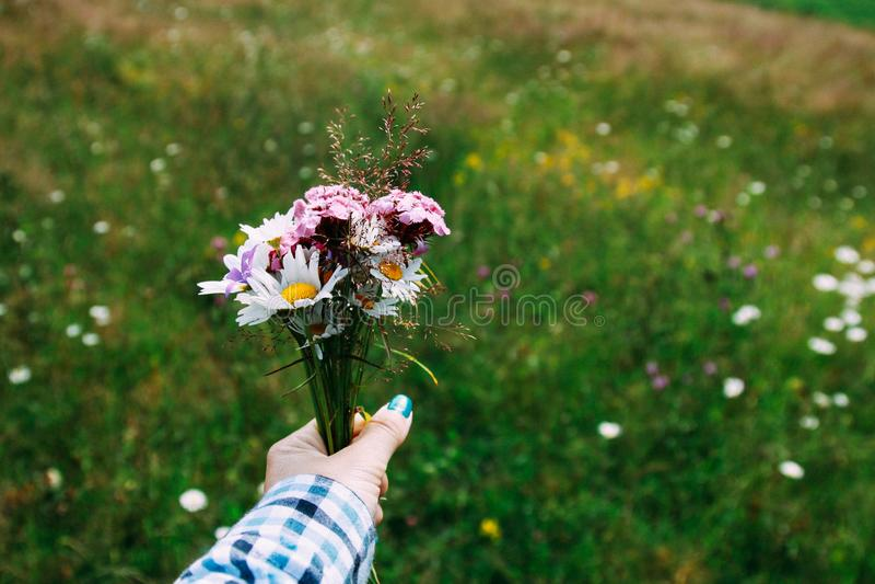 Bukiet jaskrawi wildflowers purpurowi dzwony, chamomile i inny w kobiety ręce -, mi?o?? pardwy piosenka dziki drewna natury Zako? fotografia royalty free