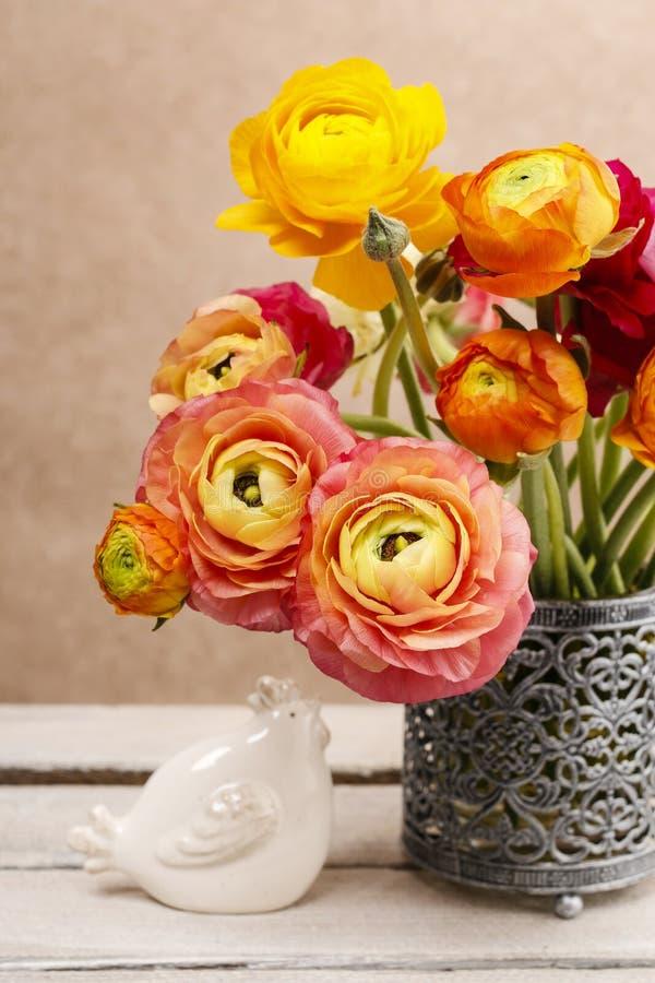 Bukiet kolorowy perski jaskier kwitnie (ranunculus) zdjęcie stock