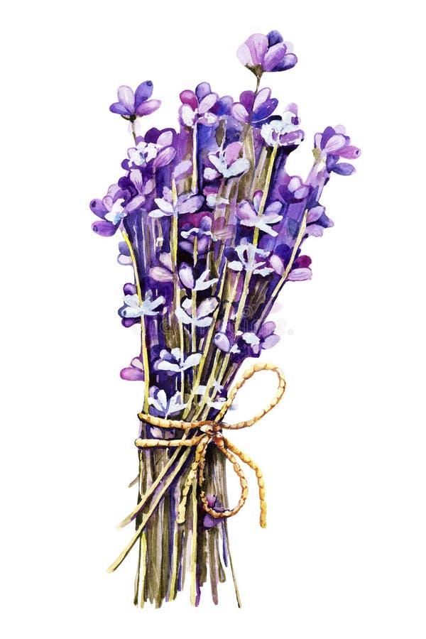 Bukiet kwiatów lawendy, gałązki związane szpagatem, holowanie Ręczna ilustracja akwareli do projektowania koncepcji ślubu, royalty ilustracja