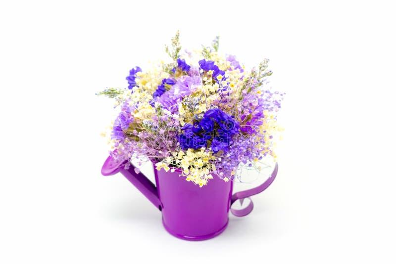 Bukiet kwiat hortensja na białym tle obraz stock