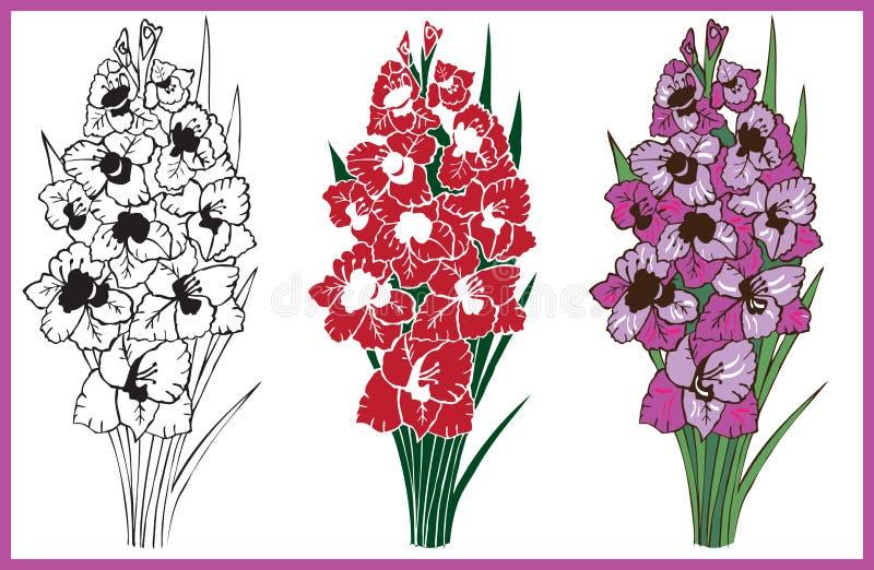 Bukiet kwiatu gladiolus royalty ilustracja
