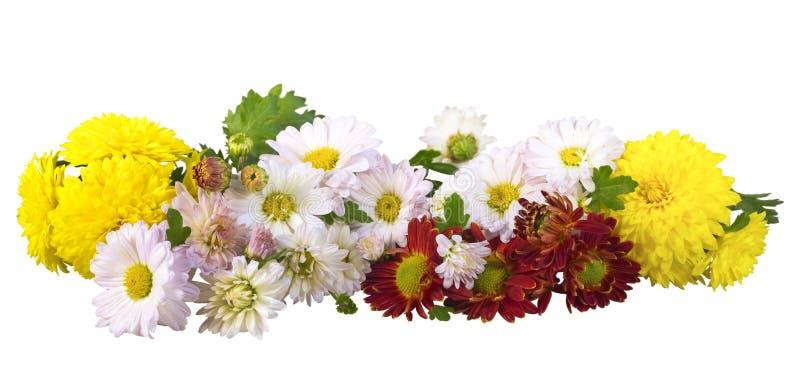 Bukiet kwiaty odizolowywający obrazy royalty free