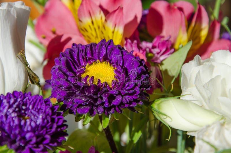 Bukiet kwiaty, purpurowy aster w wodnych kropelkach obrazy stock