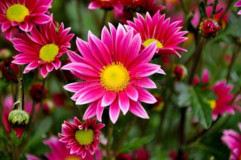 Bukiet kwiaty z p?atkami menchie barwi z bia?ym konem i ? fotografia royalty free