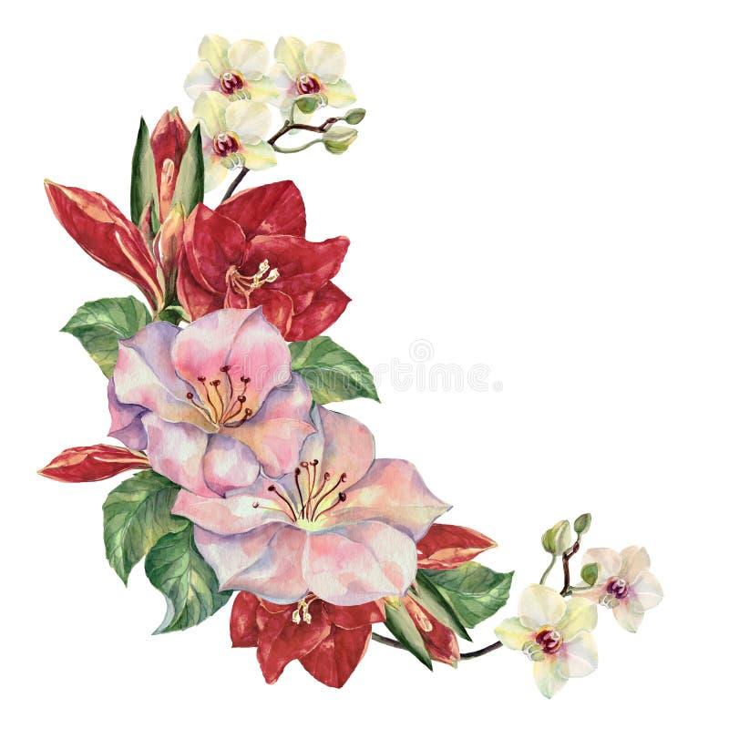 Bukiet kwitnie z Amaryllis Kwiecisty ilustracja kąt royalty ilustracja