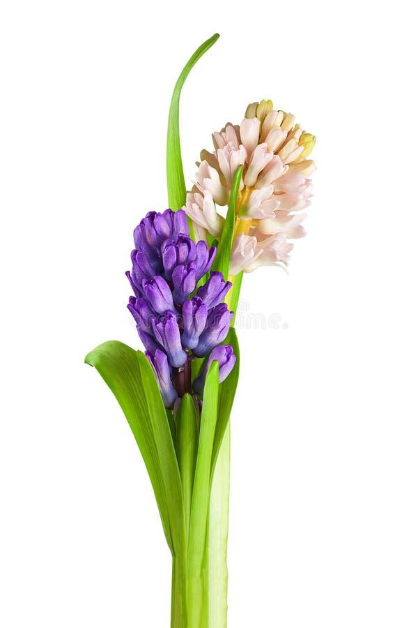 Bukiet od hiacyntowego kwiatu przygotowania centerpiece odizolowywał o obraz stock