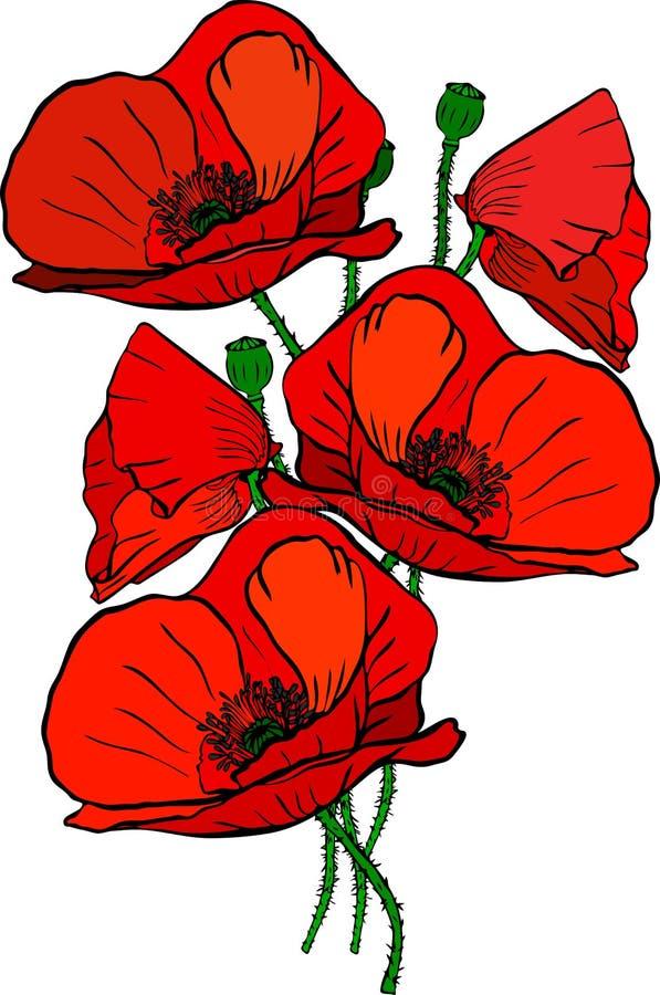 Bukiet pięć czerwonych kwitnie maczków i zieleń wywodzi się royalty ilustracja