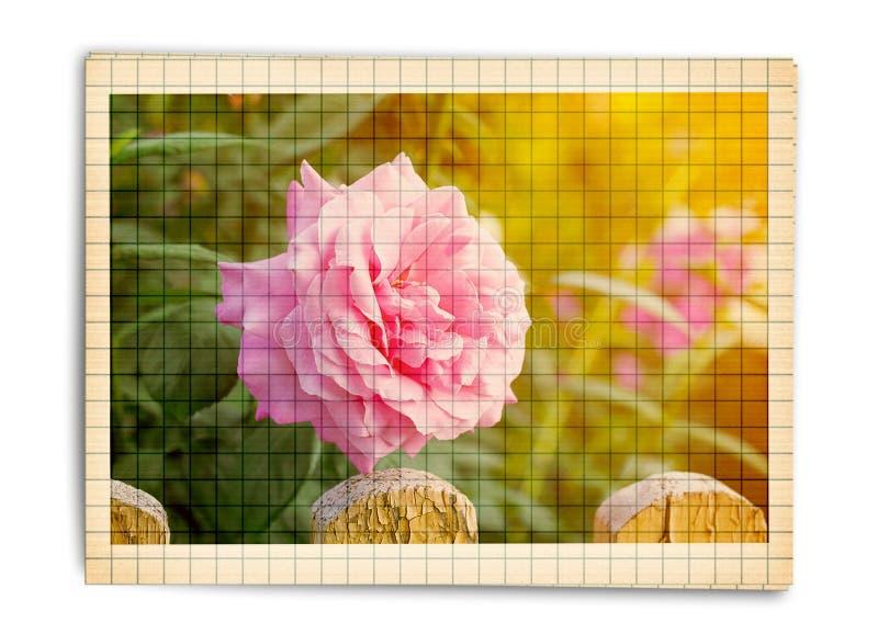 Bukiet piękne różowe róże z gratulacje lub zaproszeniem royalty ilustracja