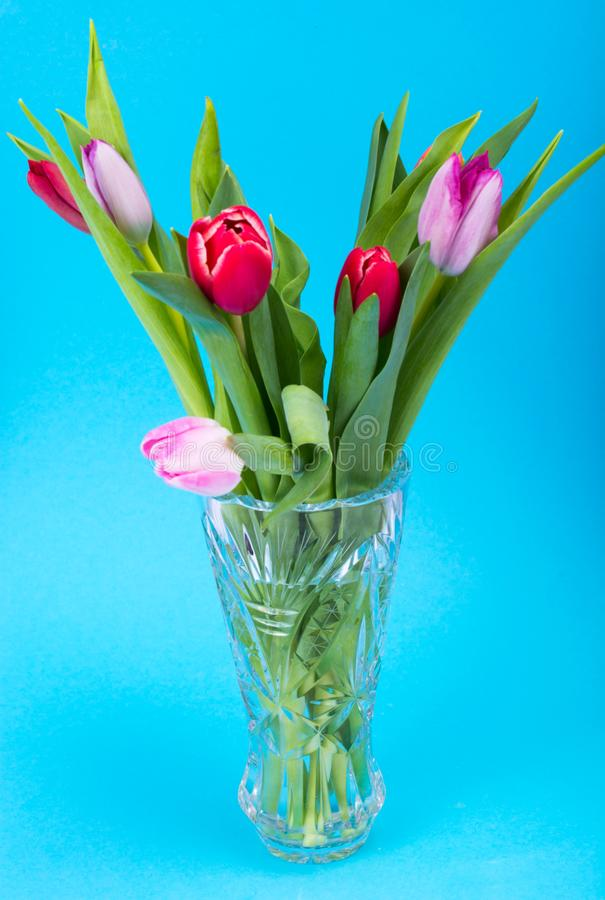 Bukiet piękni świezi tulipany w krystalicznej rocznik wazie obraz royalty free
