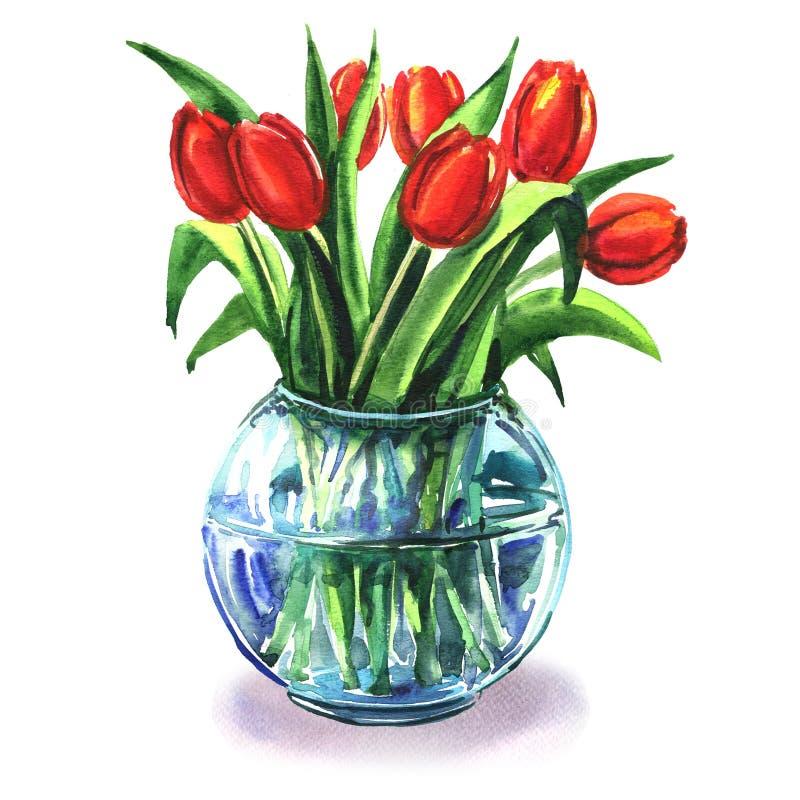 Bukiet piękni czerwoni tulipany w szklanej wazie odizolowywającej, akwareli ilustracja ilustracji