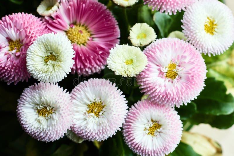 Bukiet piękni stokrotka kwiaty zdjęcie stock