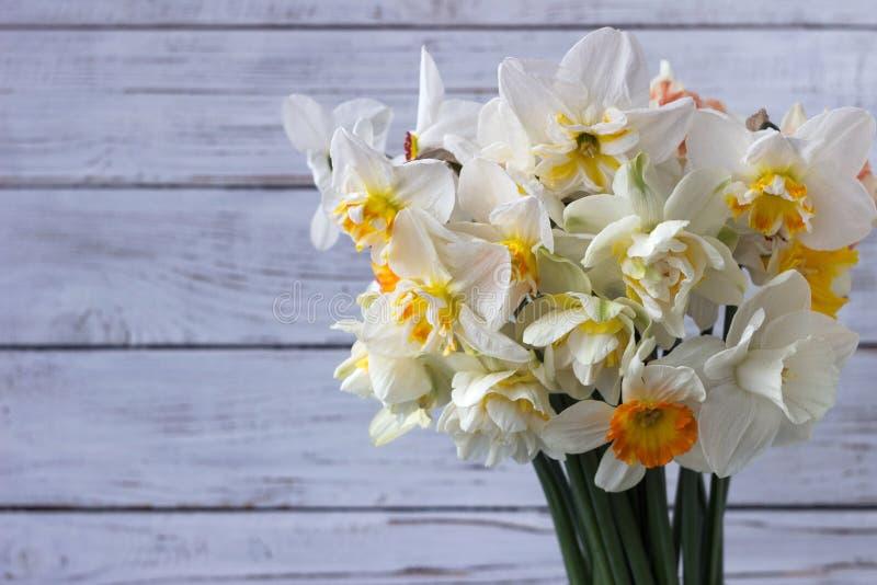 Bukiet pięknych daffodilów różnych typów i tulipanów, tło Kwiaty wiosenne, daffodils terry i żółty fotografia royalty free