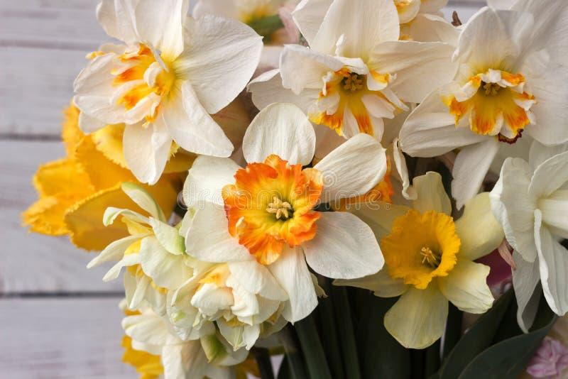 Bukiet pięknych daffodilów różnych typów tła Kwiaty wiosenne, daffodils terry i żółty obrazy stock