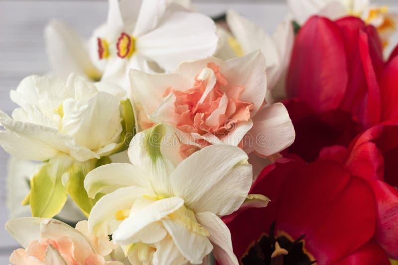 Bukiet pięknych dafodilów różnego rodzaju, czerwonych tulipan i hyacyntów na białym drewnianym tle obraz royalty free