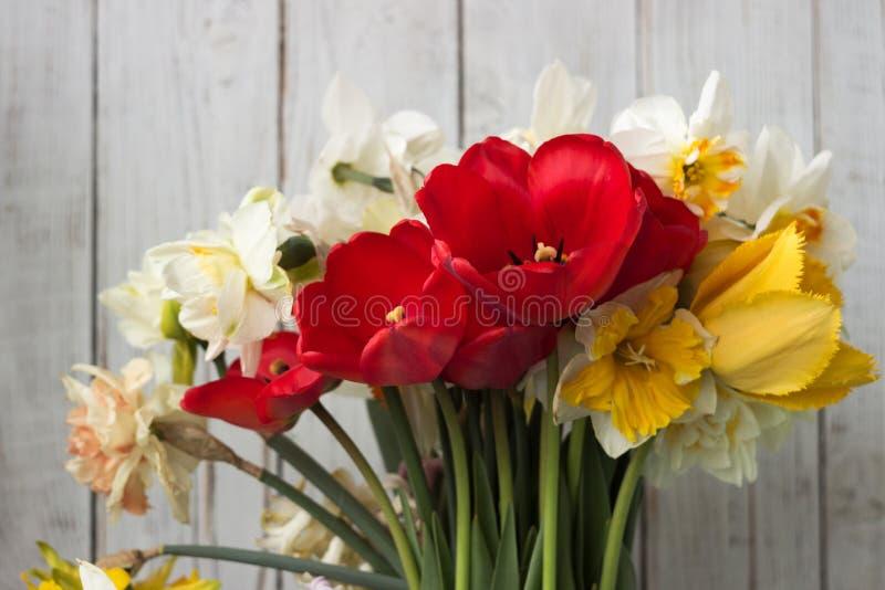 Bukiet pięknych dafodilów różnego rodzaju, czerwonych tulipan i hyacyntów na białym drewnianym tle zdjęcia royalty free