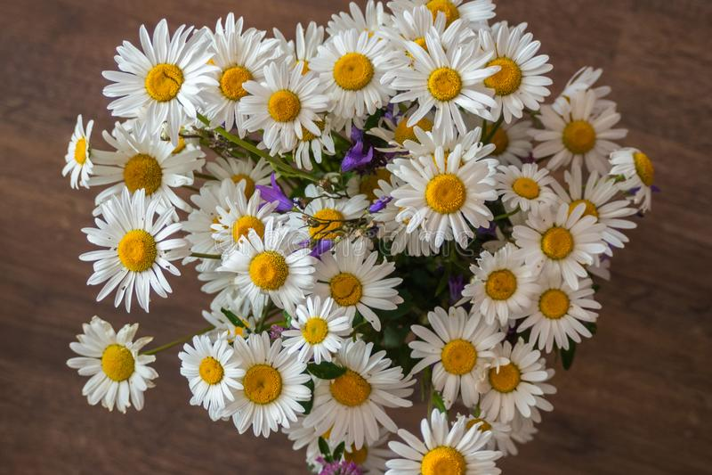 Bukiet prości dzicy kwiaty obraz royalty free