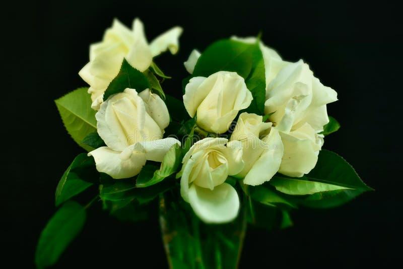 bukiet róż białe zdjęcia stock
