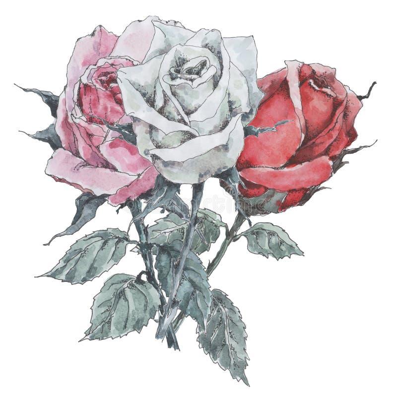 Bukiet róże, menchie, biel i czerwieni trzy, akwarela na bia?ym tle ilustracja wektor