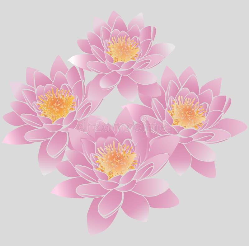 Bukiet różowa leluja pączkuje z żółtymi stamens ilustracji
