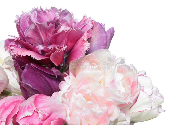 Bukiet różowi tulipany odizolowywający na białym tle zdjęcie stock