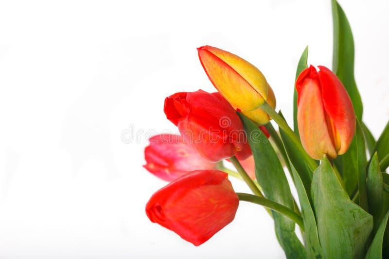 Bukiet różowi tulipany odizolowywający na białym tle z kopii przestrzenią fotografia stock