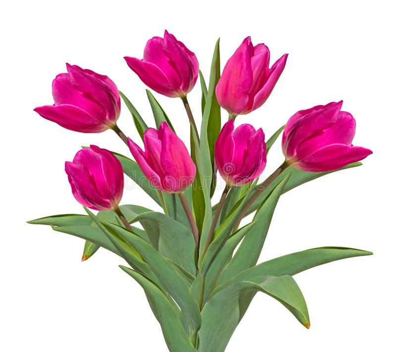 Bukiet r??owi tulipany odizolowywaj?cy na bia?ym tle obrazy royalty free