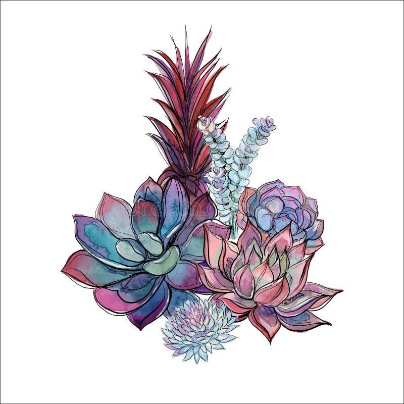 Bukiet sukulenty Kwiatu przygotowania dla projekta akwarela grafit wektor royalty ilustracja
