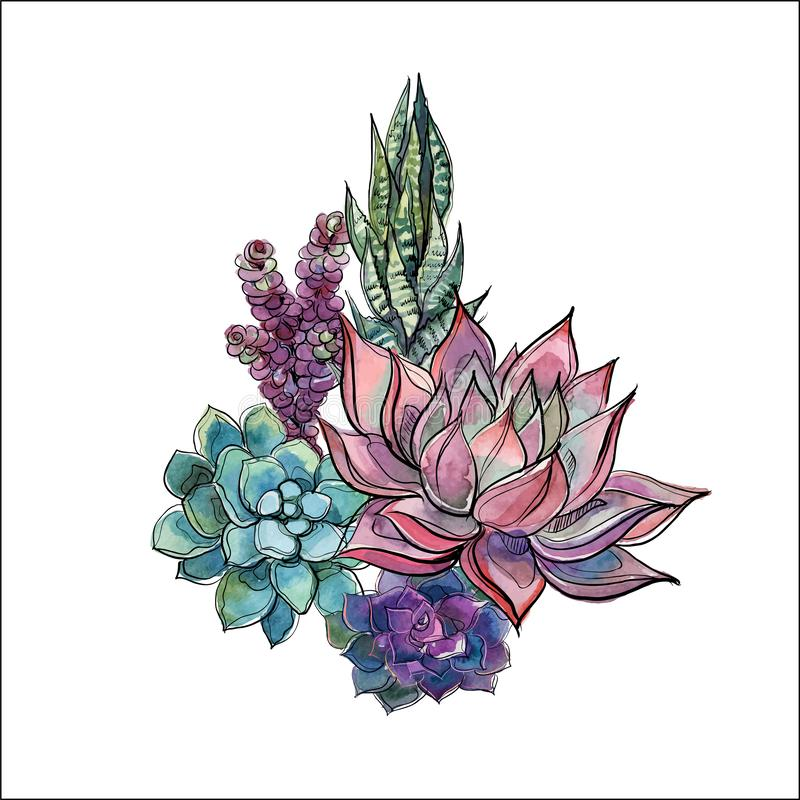 Bukiet sukulenty Kwiatu przygotowania dla projekta akwarela grafit wektor ilustracji