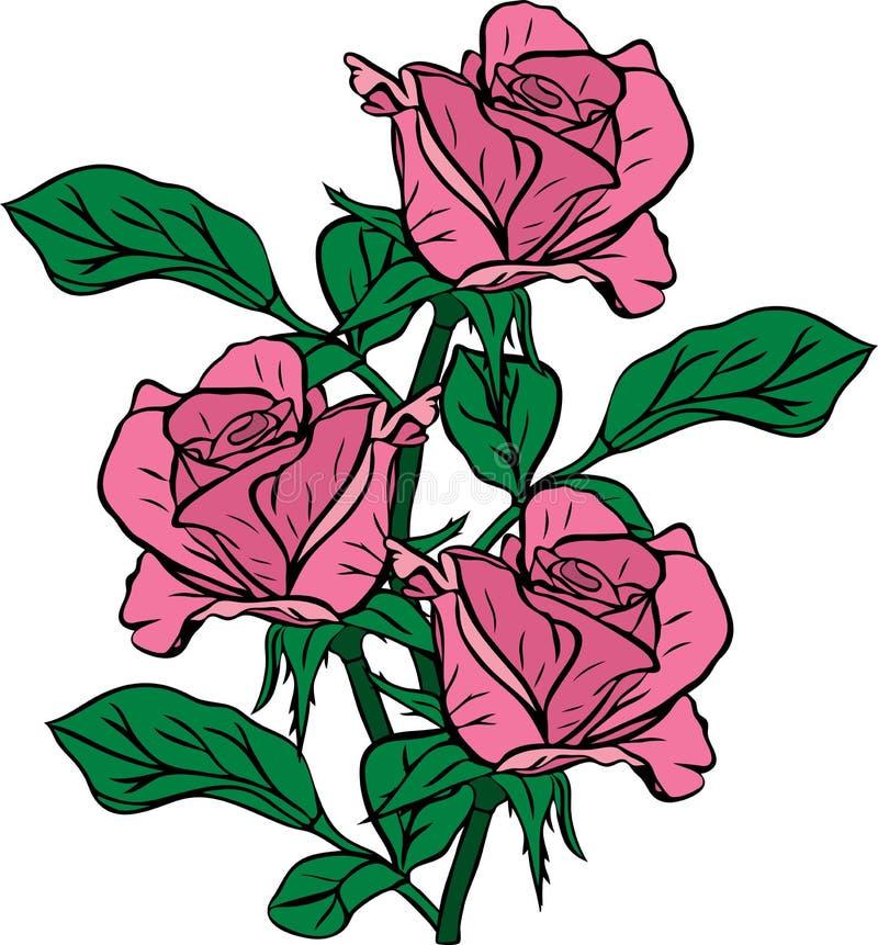 Bukiet trzy różowej róży rysującej ręką ilustracji