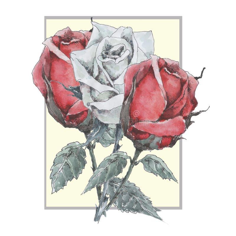 Bukiet trzy róży w ramie Na lewicie jest czerwony, w środku biały jest i na dobrze jest czerwony Akwarela na bielu ilustracja wektor