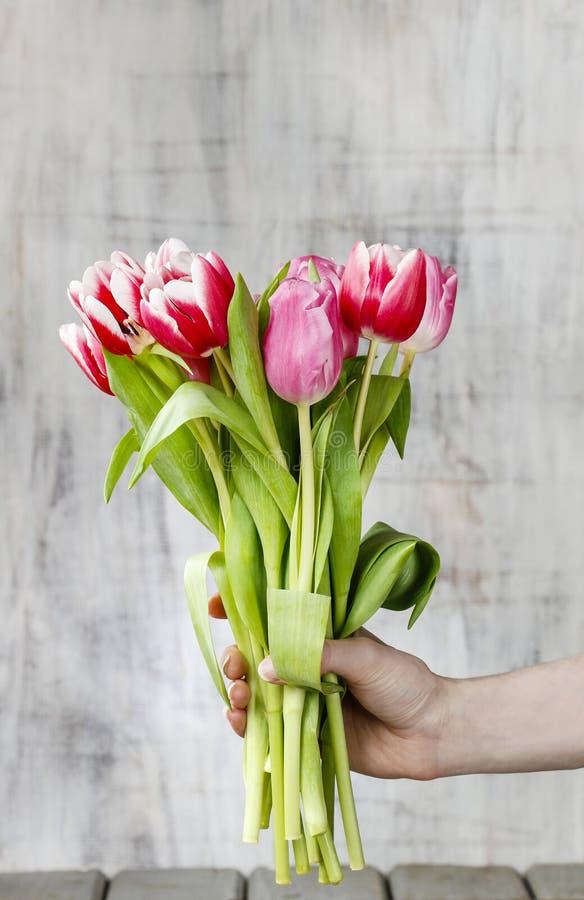 Bukiet tulipany w pięknej ręce fotografia stock