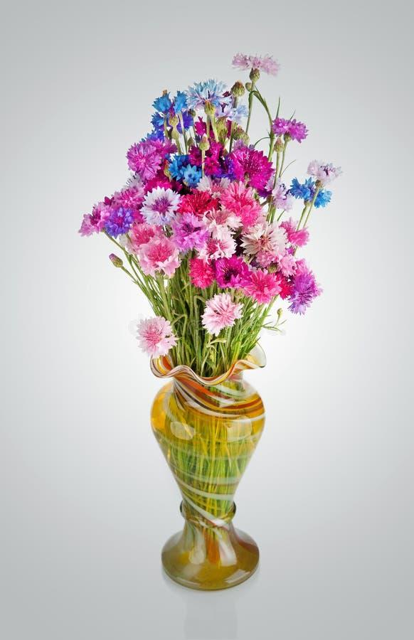 Bukiet wiele piękni barwiący cornflowers kwitnie wewnątrz zdjęcia royalty free