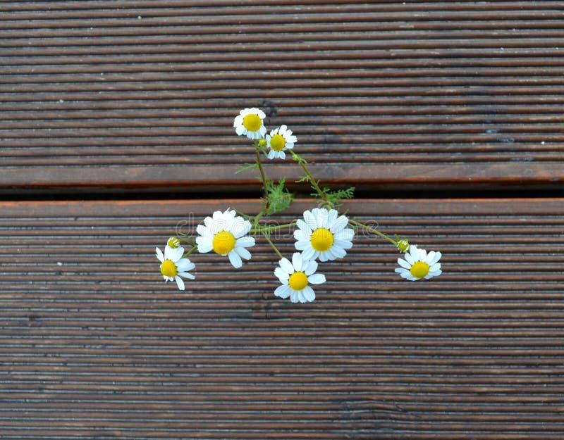 Bukiet wildflowers na drewnianym tle fotografia royalty free