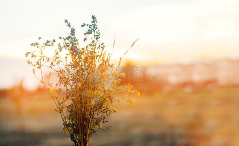 Bukiet wildflowers pole, zmierzch pojęcia tła ramy piasek seashells lato Natura obrazy royalty free