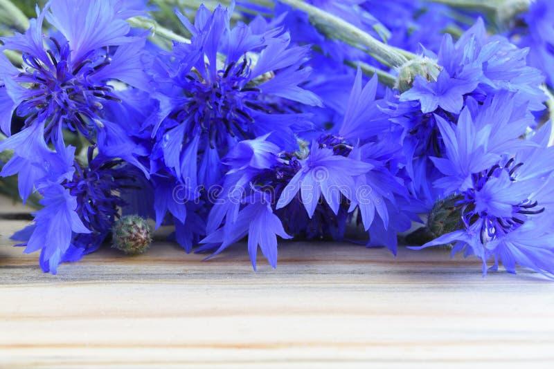 Bukiet wspaniałe nornicy kwiaty cornflowers obraz stock