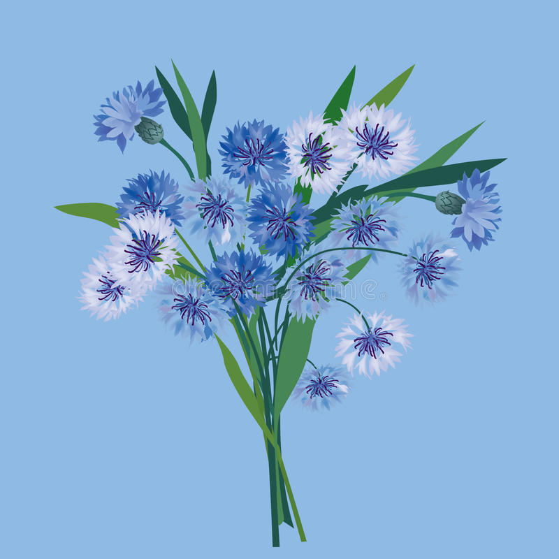 Bukiet z błękitny kwiatami ilustracja wektor