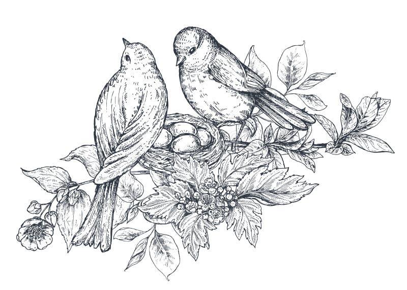 Bukiet z ręka rysującymi okwitnięcie ptakami i gałąź royalty ilustracja