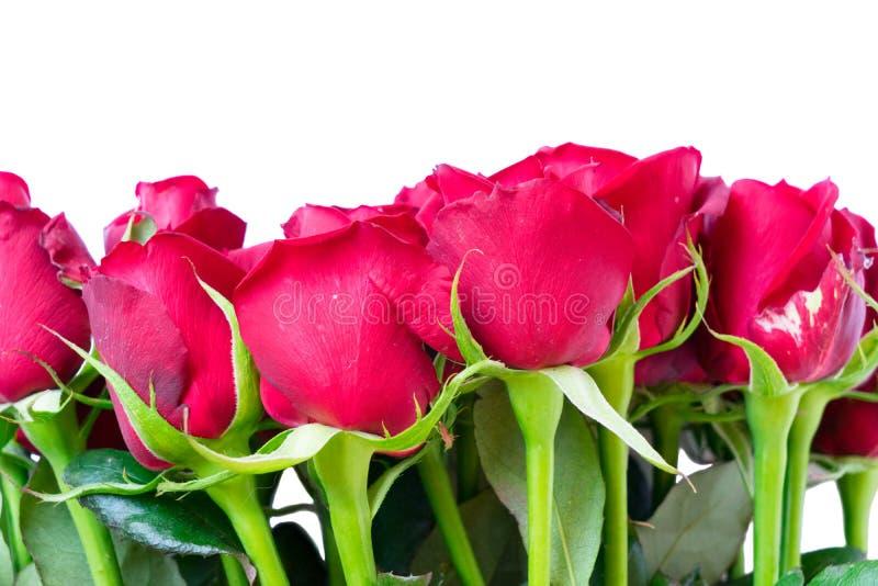 Bukiet zmrok - czerwone róże obraz stock