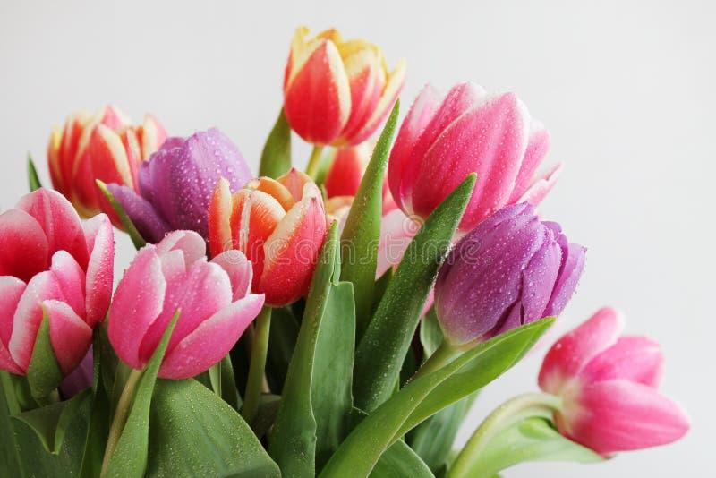 bukieta koloru ilustracja symuluje tulipanów wektoru wodę obraz royalty free