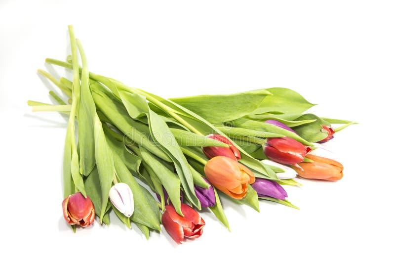 bukieta koloru ilustracja symuluje tulipan?w wektoru wod? zdjęcia stock