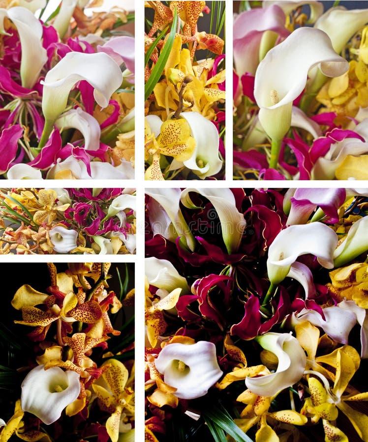 Download Bukieta kwiat obraz stock. Obraz złożonej z kwiaty, kalia - 13853505