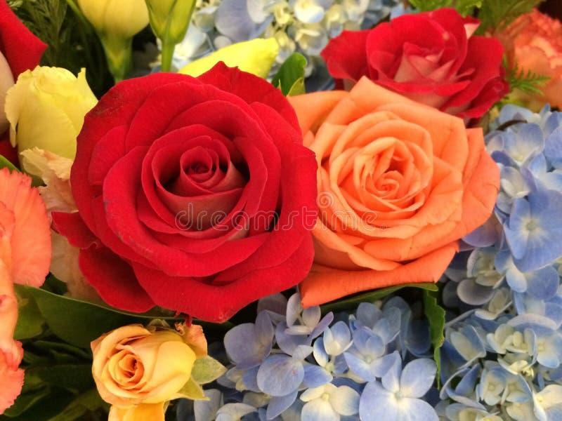bukieta róż odgórny widok zdjęcia stock
