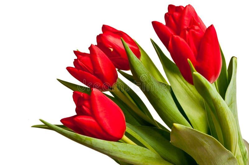 bukieta tulipan zdjęcie royalty free