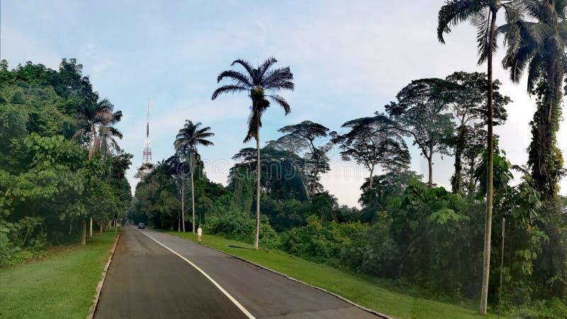 Bukit Batok nature park road. Bukit Batok nature park trail. In Singapore, walking, stroll, exercise, grass, old, growth, track, jogging, running, cycling stock photo