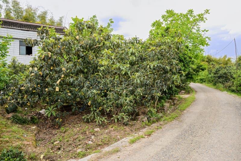 Buktig bergssidacountryroad för lantbrukarhem i fruktträd royaltyfri fotografi