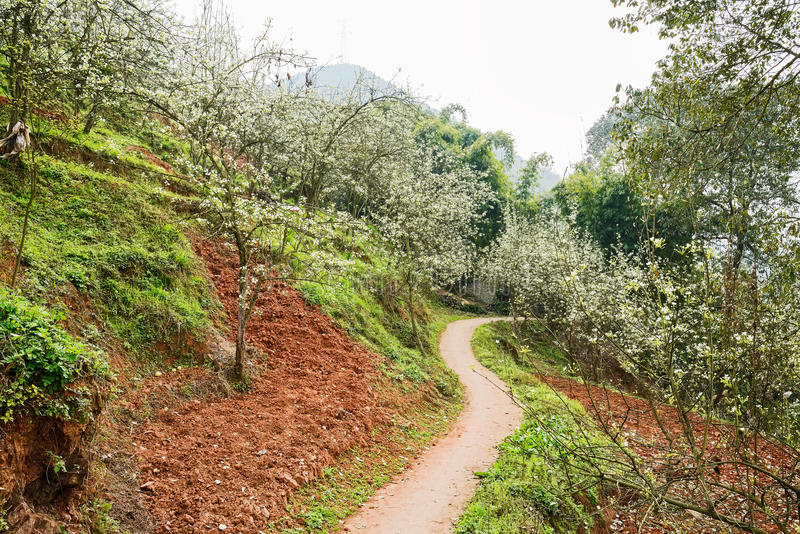 Buktig bygdvandringsled i päronblomning på den soliga våren arkivfoton