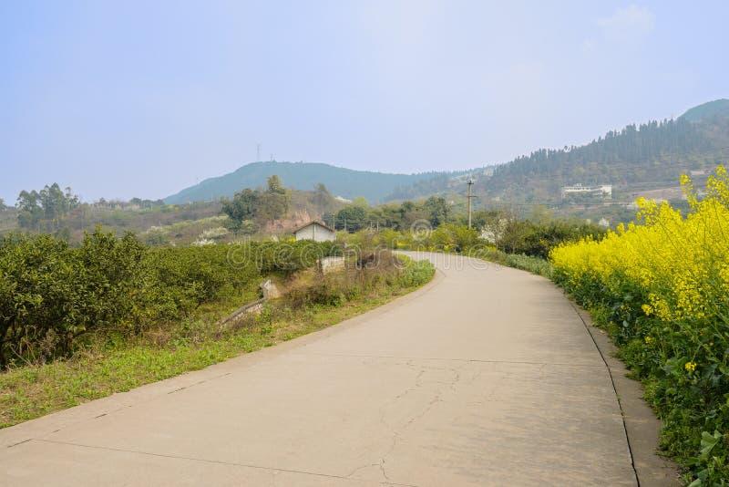 Buktig countryroad i blomningvår på solig dag arkivfoto