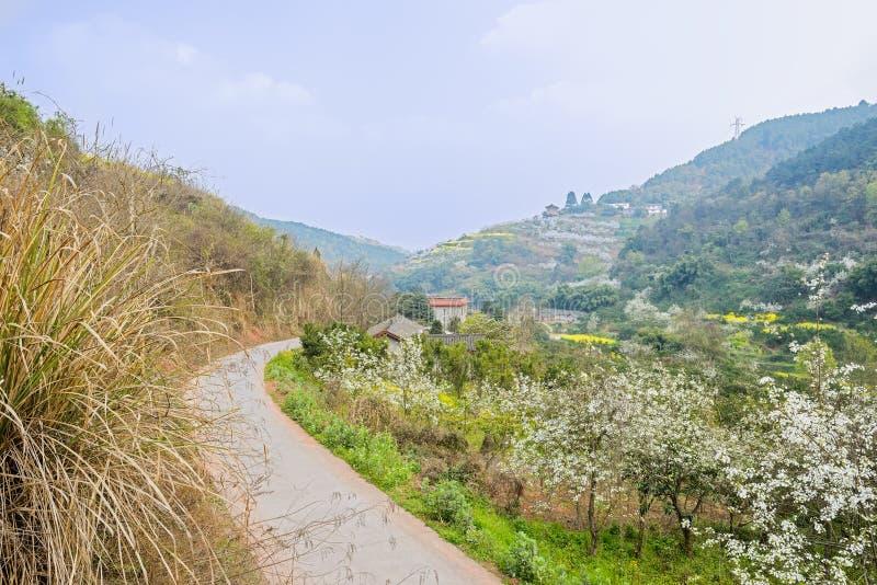 Buktig countryroad på bergssidan som är brinnande med päronblomningen och royaltyfria foton