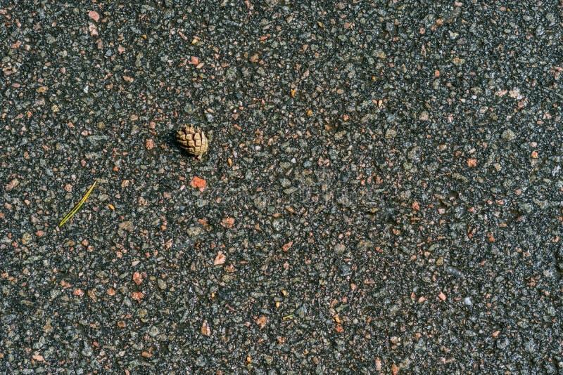 Bula på våt asfalt arkivbild