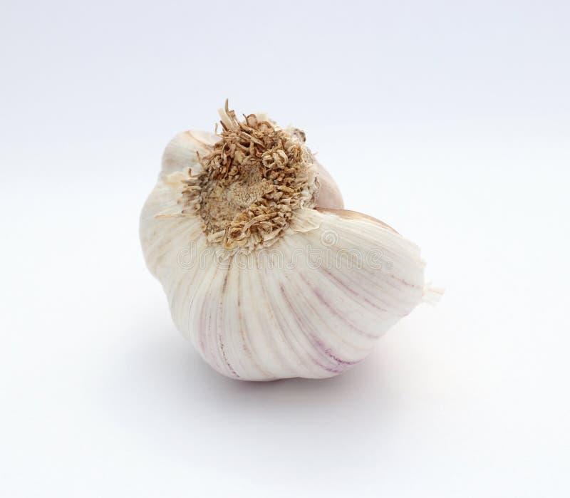 Bulb of garlic isolated on white background. Detailed image royalty free stock images